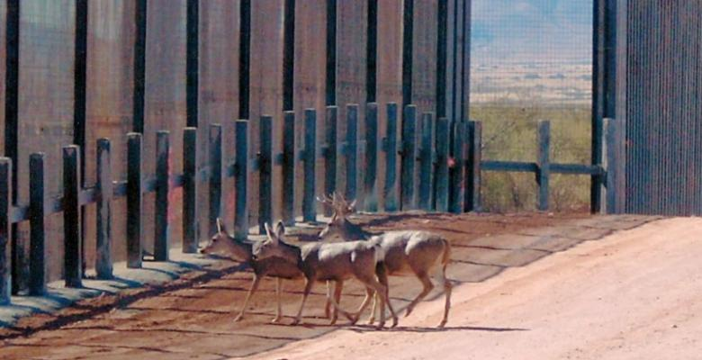 Trump's Border Wall Criticized Over Impact On Animals