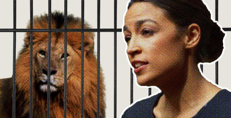 Fox Hosts Think Ocasio-Cortez Wants People to Eat 'Animals From The Zoo,' Because Socialism