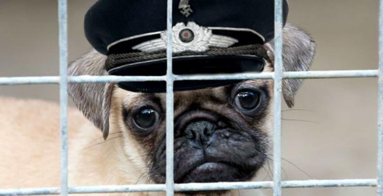 Scottish Comedian STILL On Trial For Teaching Girlfriend's Pug The Nazi Salute