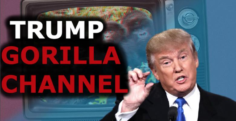 Why Did So Many People Believe The President Watches A Gorilla Channel?