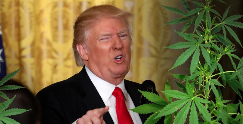The White House 'War on Weed' Ignores Marijuana's Benefits