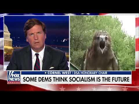 Tucker Carlson EDUCATE Bird Brain Socialist
