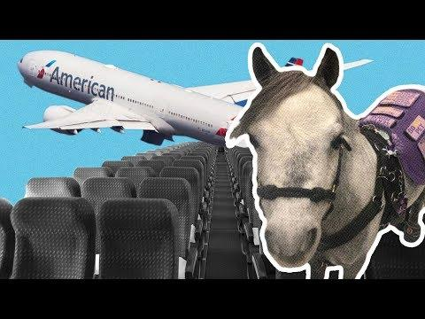 2 More Airplane Stories: Woman Flies With Mini Horse, Man Arrested For Buying Ticket & Not Flying
