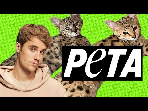 PETA Freaks Out About Justin Bieber's Exotic House Cat Purchase